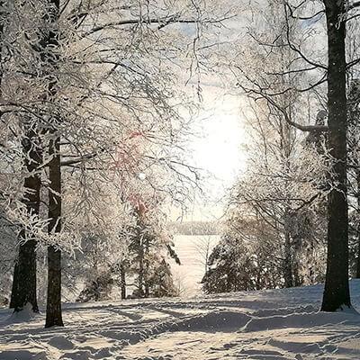 Tässä kuvassa on talvinen maisema jossa puita ja niiden välistä paistava aurinko