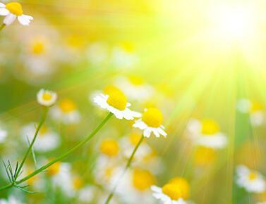 Kukkia auringossa